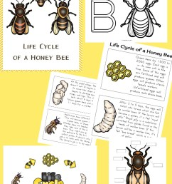 How to Make a Mason Bee Habitat - Perfect Life Cycle of a Bee Activities -  Natural Beach Living [ 1200 x 800 Pixel ]