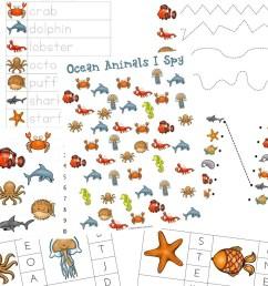 The Best Ocean Animals Preschool Activities and Printables [ 1200 x 800 Pixel ]