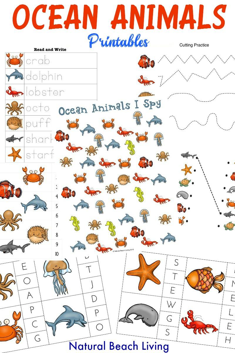 medium resolution of The Best Ocean Animals Preschool Activities and Printables