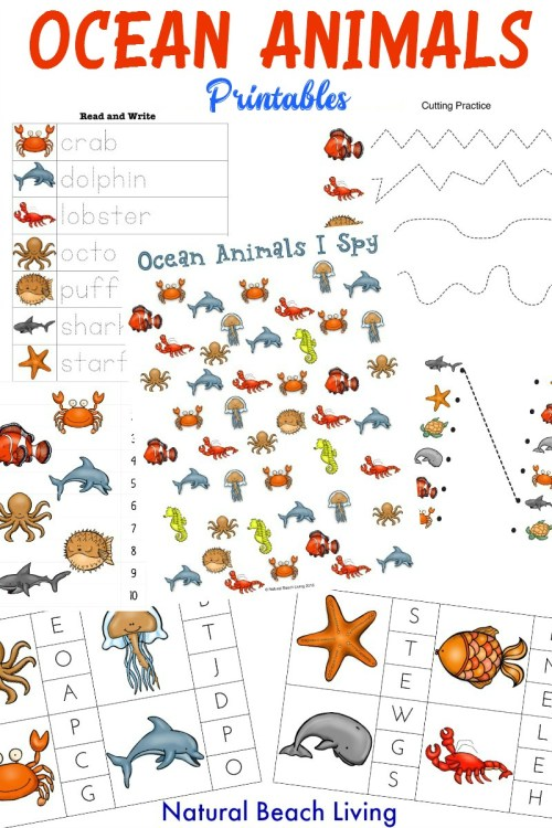 small resolution of The Best Ocean Animals Preschool Activities and Printables