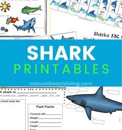 The Best Shark Printable Activities for Kids - Shark Lesson Plans - Natural  Beach Living [ 1200 x 800 Pixel ]