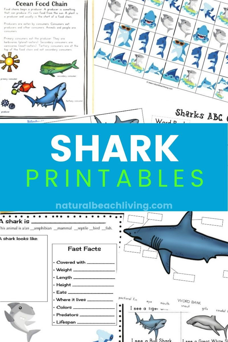 hight resolution of The Best Shark Printable Activities for Kids - Shark Lesson Plans - Natural  Beach Living