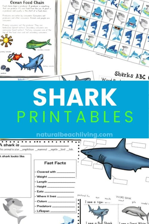 small resolution of The Best Shark Printable Activities for Kids - Shark Lesson Plans - Natural  Beach Living