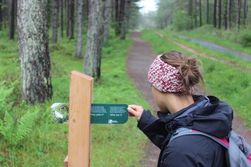 Animal Puzzle Trail