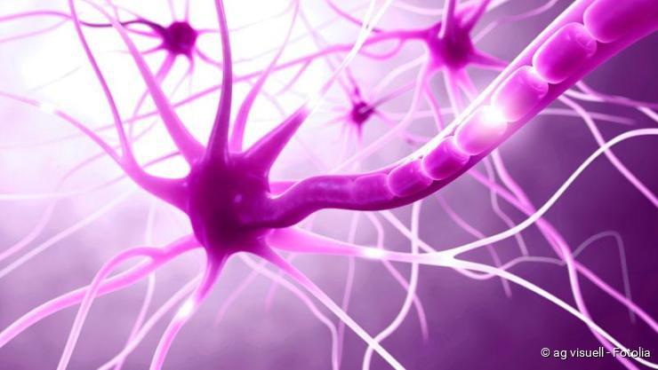 Nervenzellen; Schmerz
