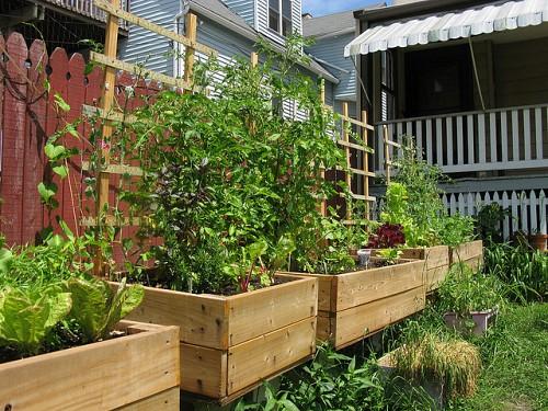 Five Ways to Use a Small Urban Backyard