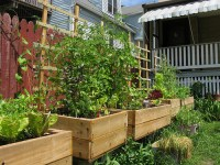 Five Ways to Use a Small Urban Backyard
