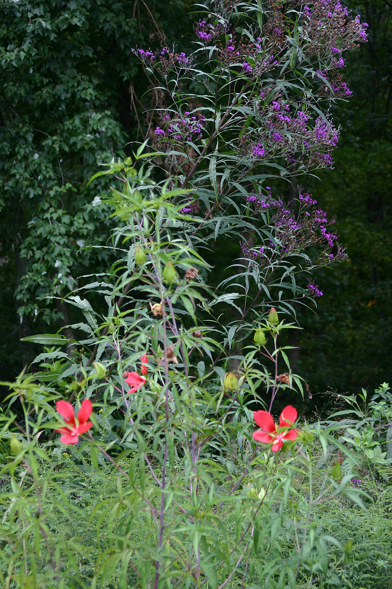 9 Native Flowers Often Mistaken for Weeds  Networx