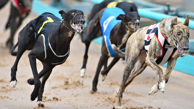 Greyhound Racing Victoria Chairman Peter Caillard Says He