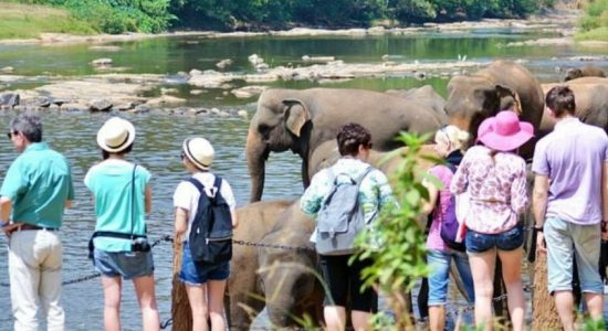 Tourist arrivals to Sri Lanka declines for the 12th consecutive month