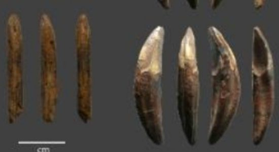 Ground-breaking study finds Sri Lanka has earliest evidence of Bow & Arrow technology outside of Africa to date