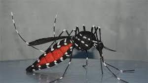 foto bij artikel Wat moet u weten over het Zikavirus?