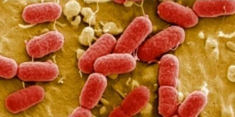 foto bij artikel Zijn superbacteriën bestand tegen de sterkste antibiotica?