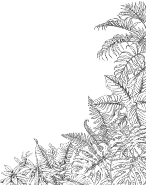 Hand drawn branches and leaves of tropical plants. Corner