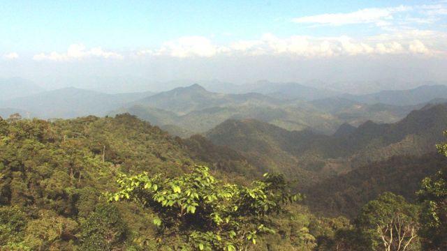 Florestas antigas não danificadas são grandes sumidouros de carbono de longo prazo. Fonte: RBGKEW