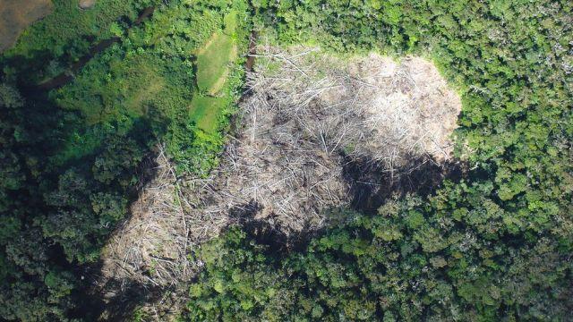 Demora pelo menos um século para restaurar florestas danificadas. Fonte: RBGKEW.