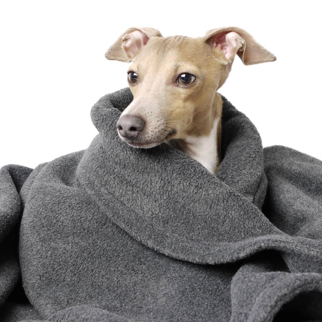 sofa for dog sofaworks clayton luxury double fleece pet blanket by charley chau ...
