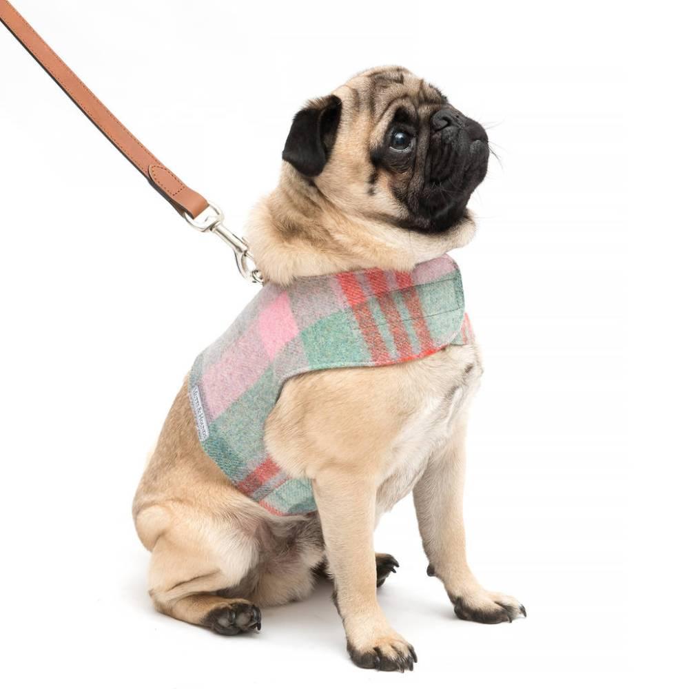 medium resolution of macaroon tweed harness