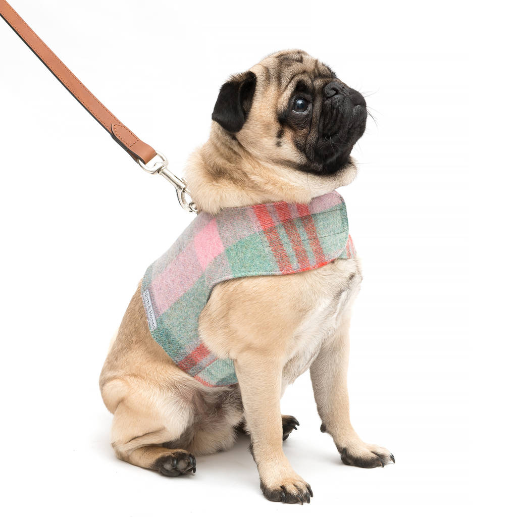 hight resolution of macaroon tweed harness