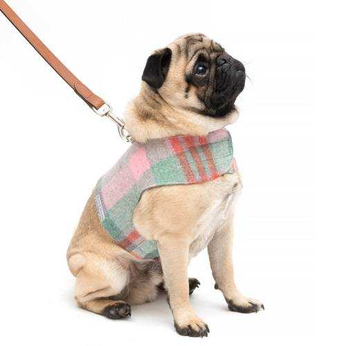 small resolution of macaroon tweed harness