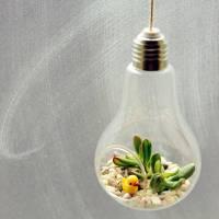 lightbulb money plant succulent hanging terrarium by ...