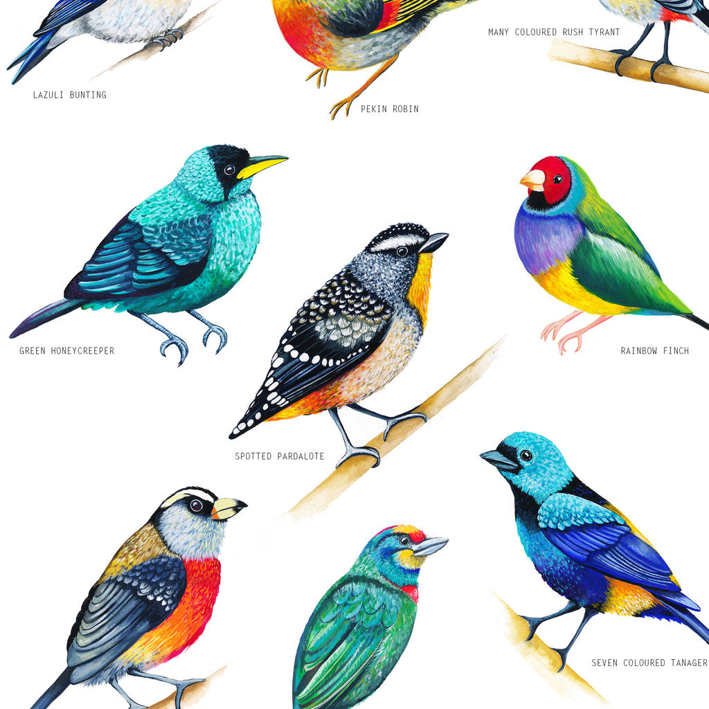 bright birds illustration print