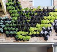 outdoor vertical wall garden planters by marquis & dawe ...