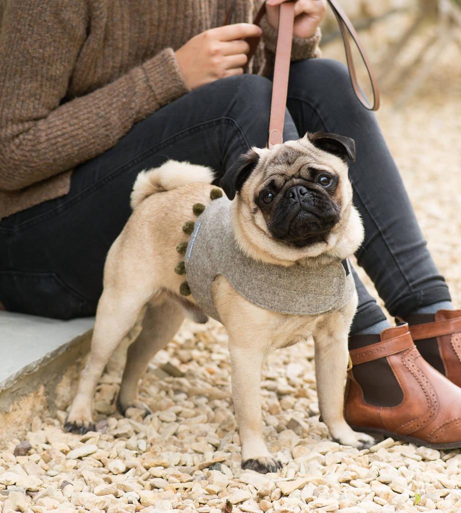 hight resolution of pom pom soft dog harnesses
