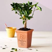 personalised family tree pot by letterfest ...