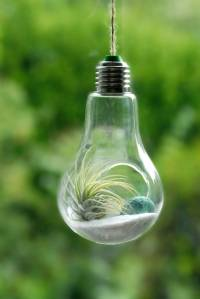 lightbulb air plant hanging terrarium by dingading ...