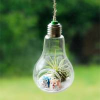 hanging lightbulb air plant terrarium with owls by ...