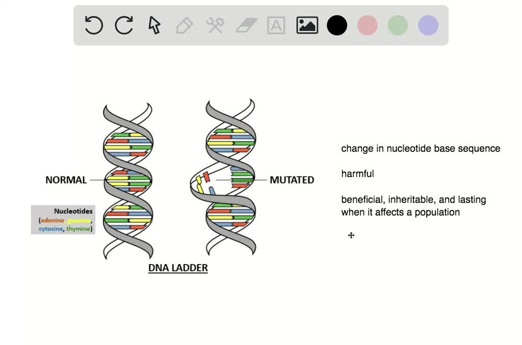 SOLVED:Before mutations can affect a population p…