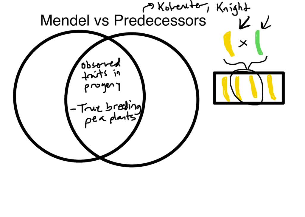 SOLVED:What property distinguished Mendel's inves…