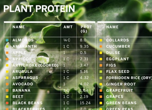 Protein_Chart_MAIN-500x361