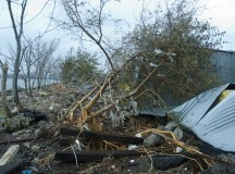 Slideshow: Mott Haven After Sandy