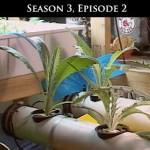 219: Season 3, Episode 2