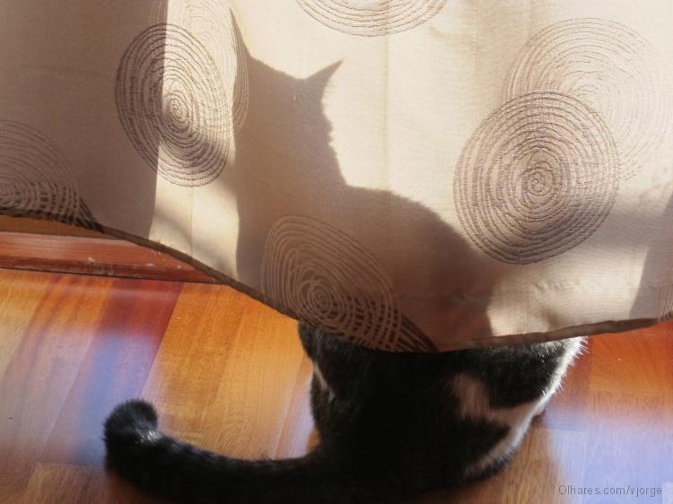 Resultado de imagem para gato escondido com rabo de fora