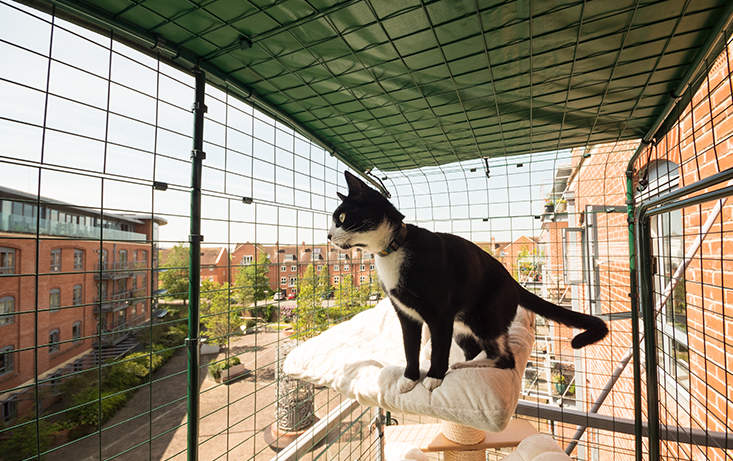 cat balcony enclosure the ultimate