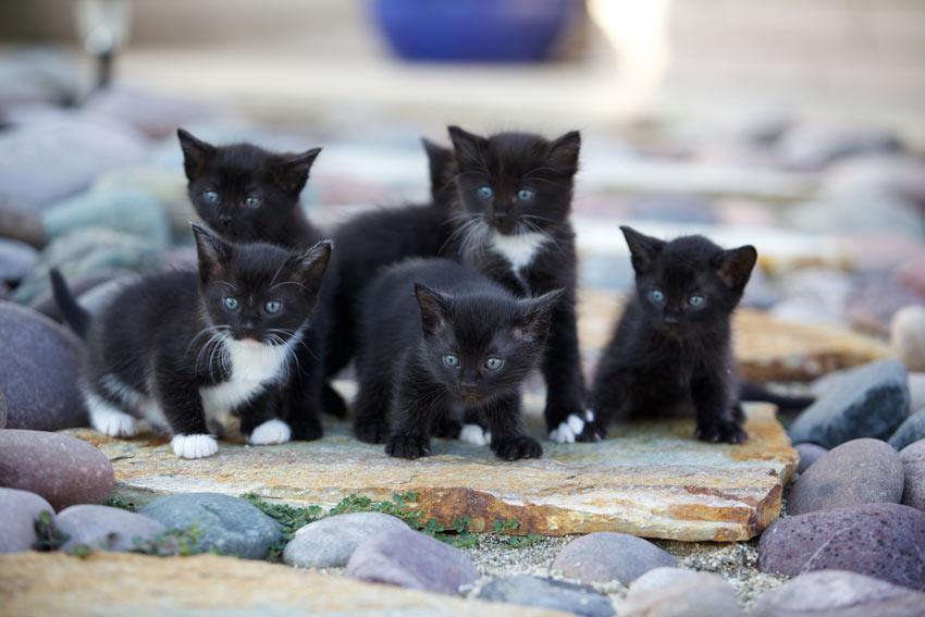 choosing a kitten from