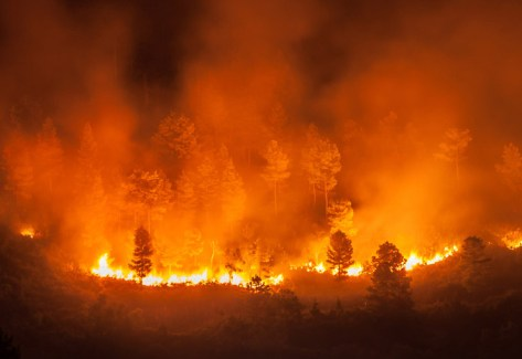 Incendi in Australia - PXR Italy
