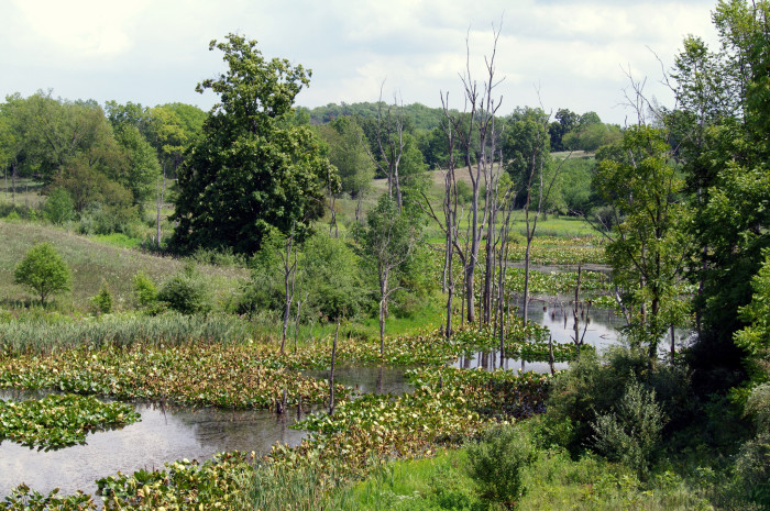 3.) Hiking Trails of Pokagon State Park