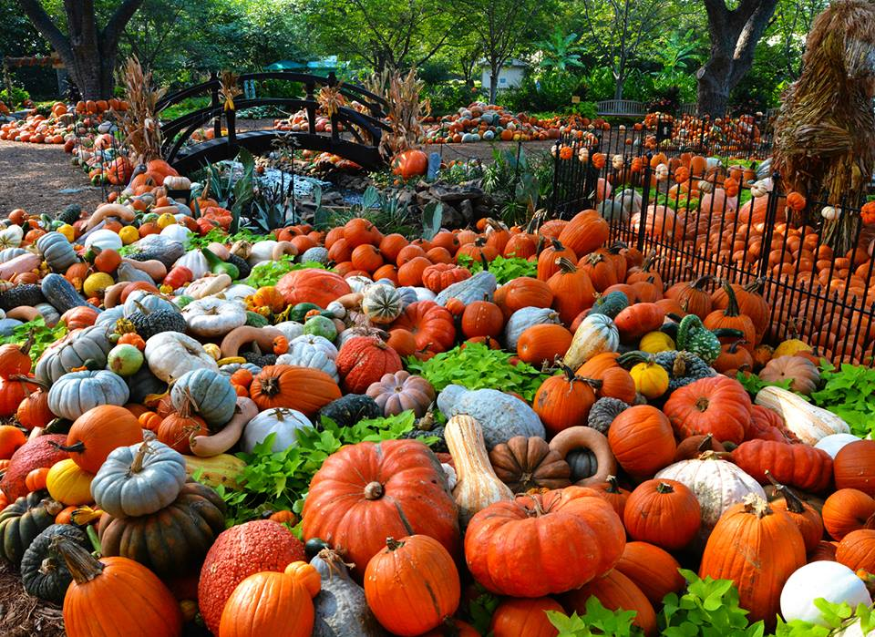 Fall Cottage Wallpaper 10 Great Pumpkin Patches In Texas