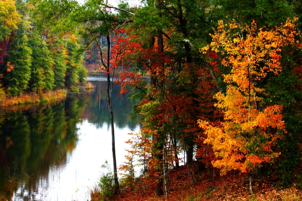 Stunningly Beautiful Fall Foliage At Mississippi State Parks
