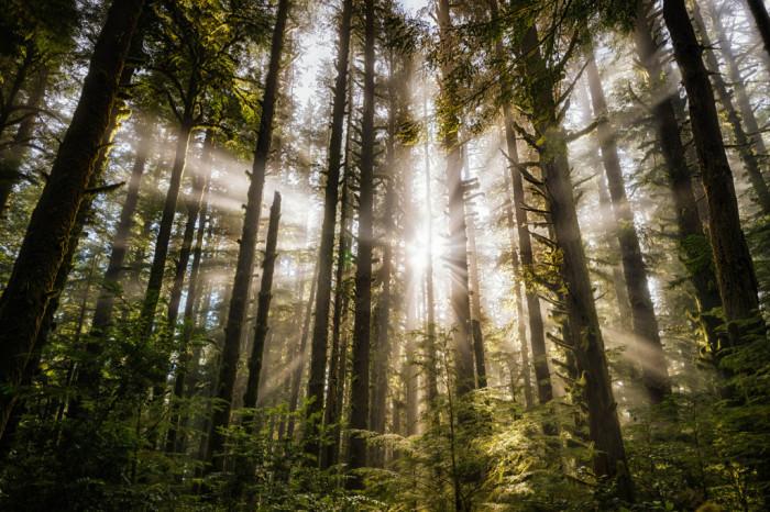 Wallpaper Falling Off 15 Breathtaking Cinematic Photos Taken In Oregon