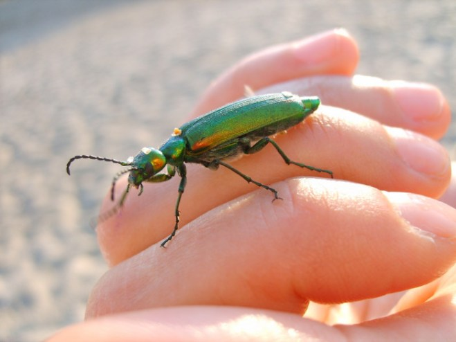 insect-control-lakewood-ranch