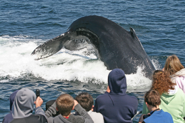 8. Go on an epic whale watch.