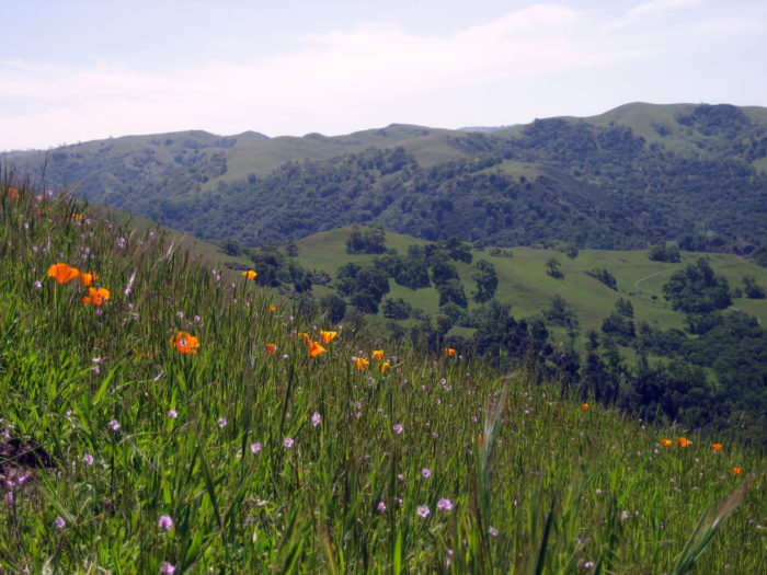 9 Completely Relaxing Natural Spots in Northern California