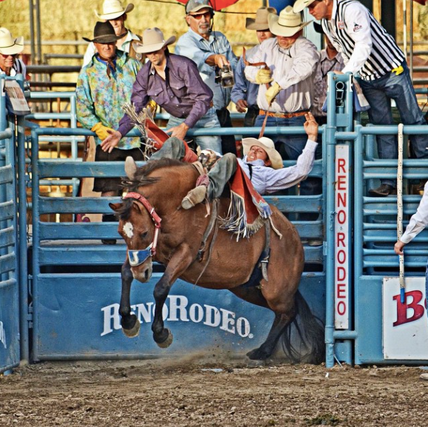 7. Watch the cowboys at the Reno Rodeo Cattle Drive.