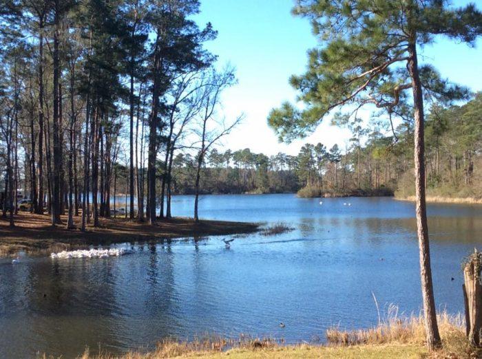 8 Must Visit Swimming Holes In Louisiana