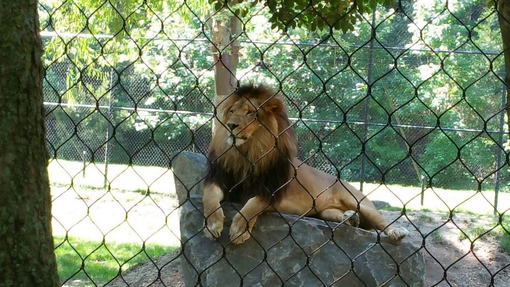 One Of The Best Zoos In The Nation Is Right Here In New